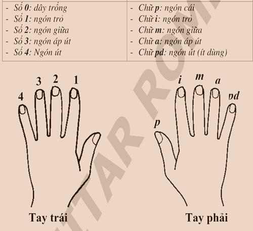 Quy tắc ngón tay trên Ukulele